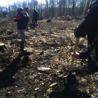 plantare-copaci-ocolul-silvic-ciurea-iasi